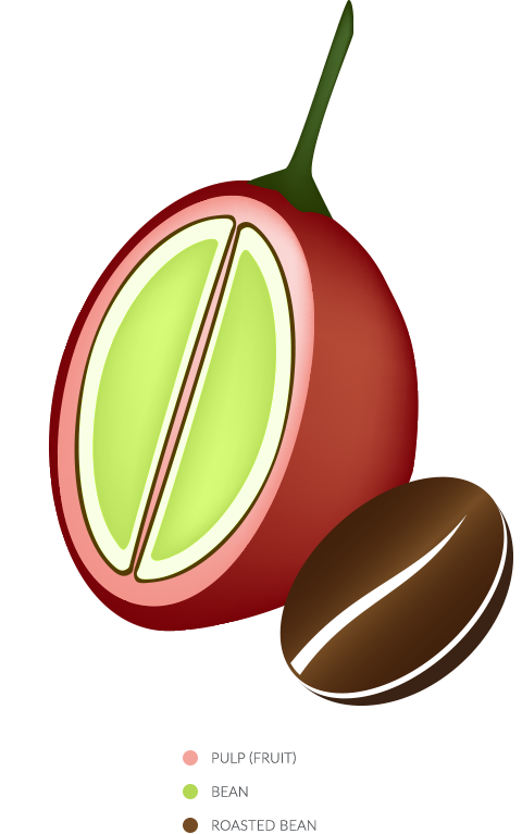 GlycoCafe Mannatech coffee fruit bean